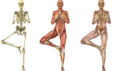 La Relazione Occluso-Posturale : la danza degli equilibri